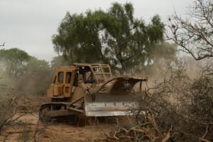 deforest1